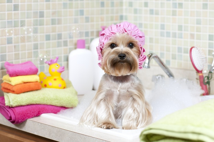 Top 10 Best Shampoos for Dogs in 2020 (For Puppy, Hypoallergenic and more)