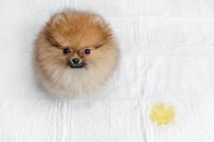 Top 10 Best Carpets Hygienic for Dogs