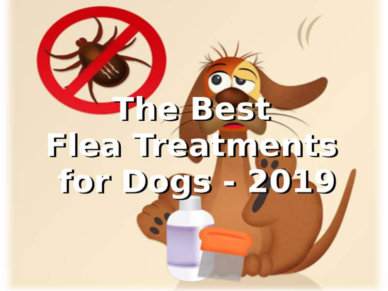 Best flea treatment for dogs 2019